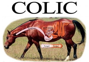 Diet Induced Colic In Horses