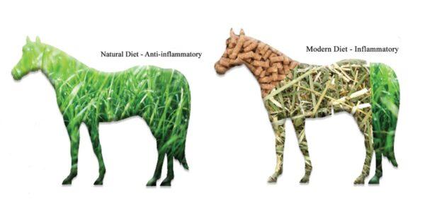 Inflammation Horses