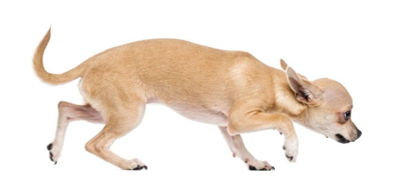 Anxiety-in-dogs-CEN-Nutrition