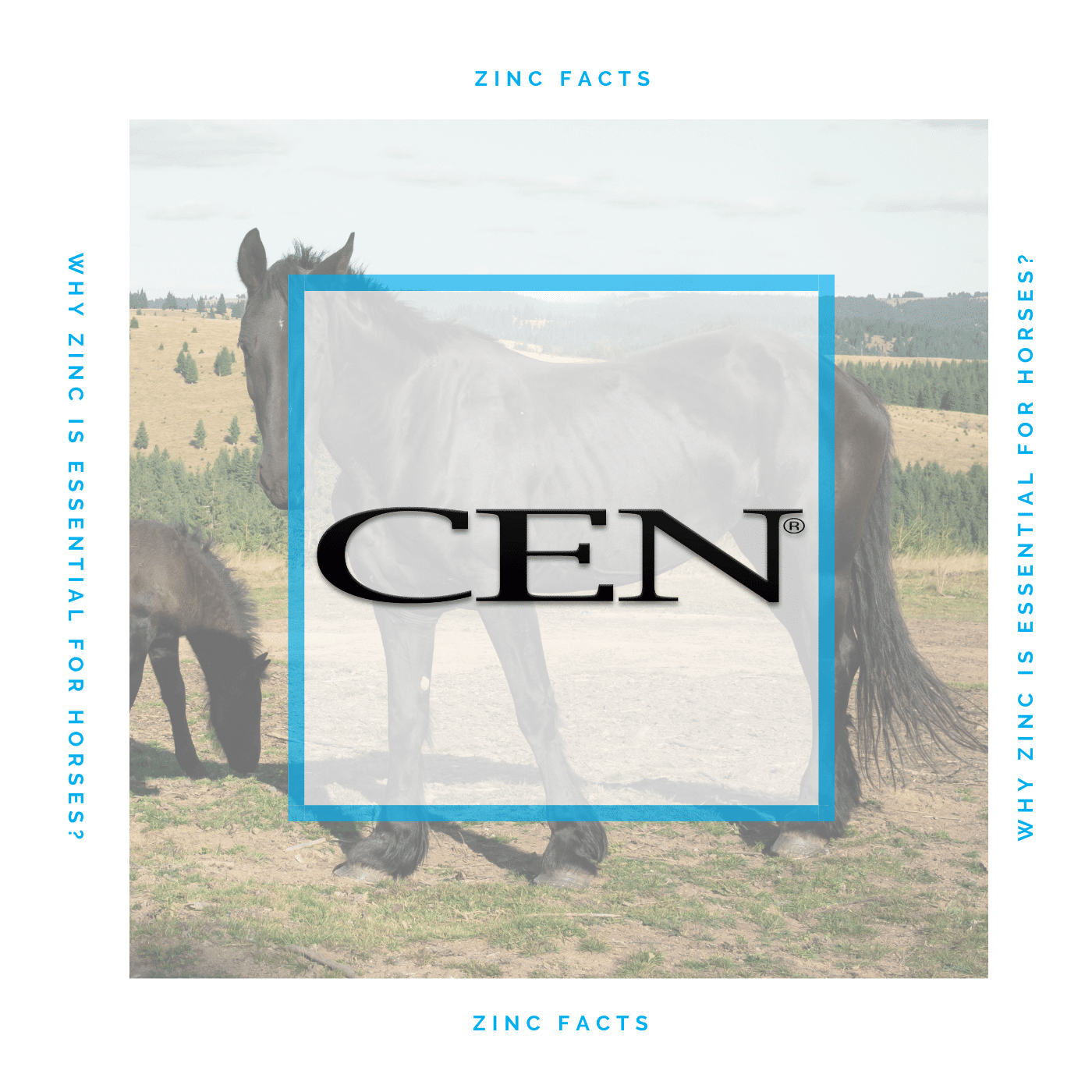 Episode 24 ZINC FACTS - Why Zinc Is Essential For Horses