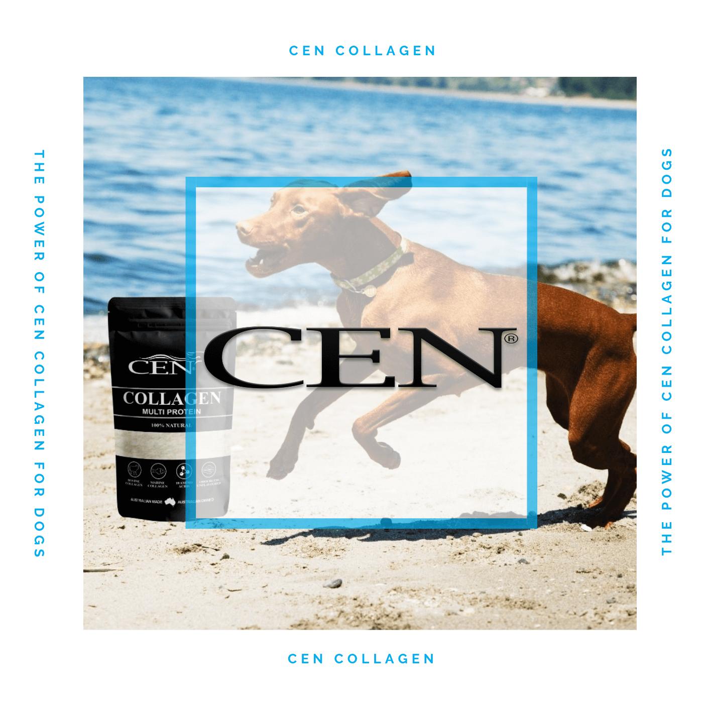 Episode 4 CEN Collagen Health Benefits For Dogs