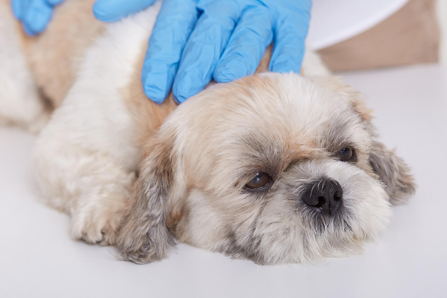 LEAKY GUT CONDITION IN DOGS CEN Nutrition