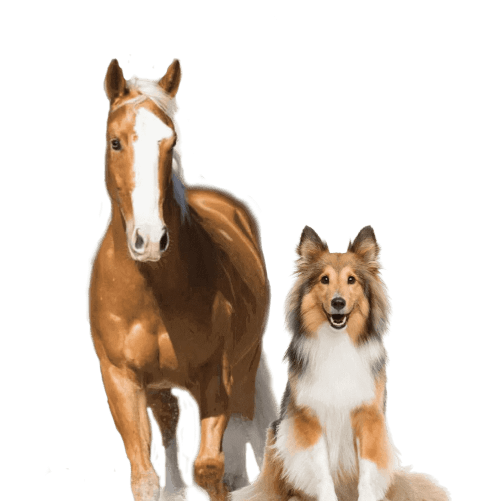 CEN Horse and Dog