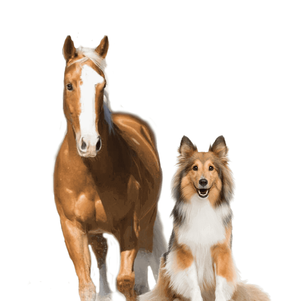 CEN Nutrition Horse and Dog