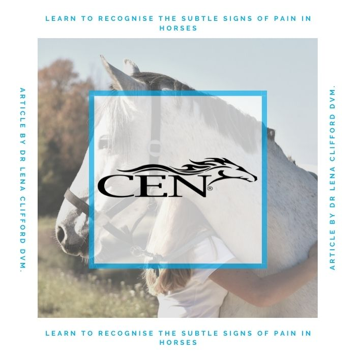 Episode 44 LEARN TO RECOGNISE THE SUBTLE SIGNS OF PAIN IN HORSES - Article By Dr Lena Clifford DVM.