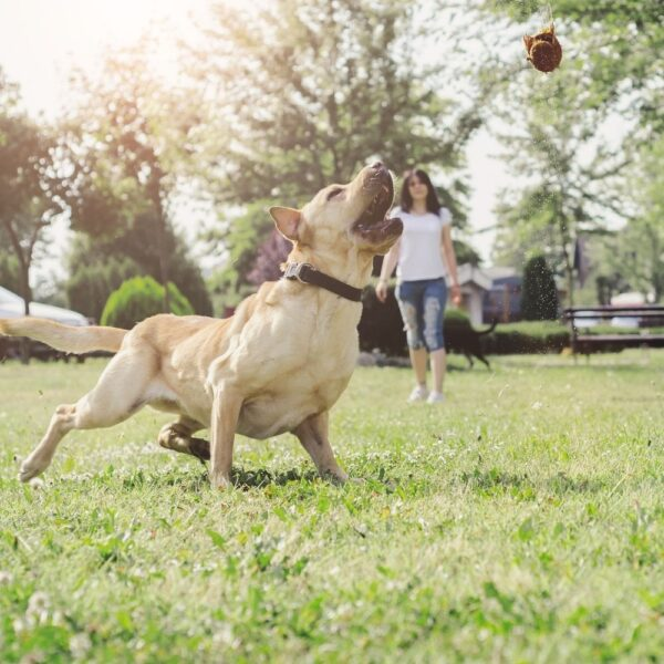 Different types of dogs require different amounts of exercise